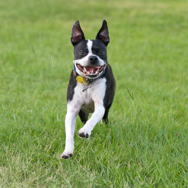 Dental Exams for Dogs in Portland, OR